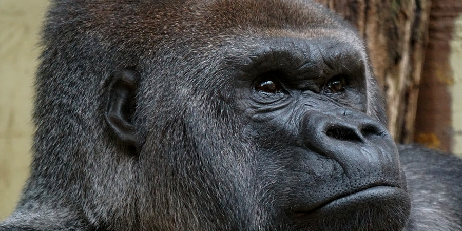 Uganda wildlife parks